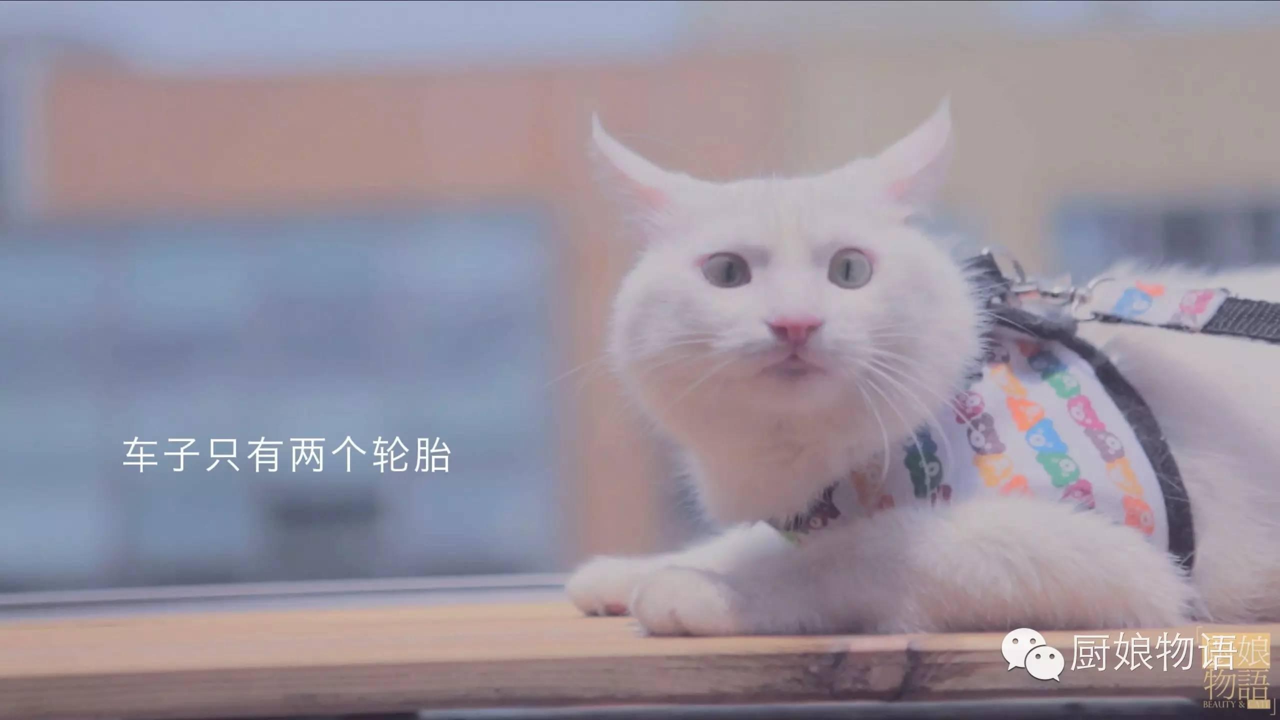 壁纸 动物 猫 猫咪 小猫 桌面 2560_1440图片