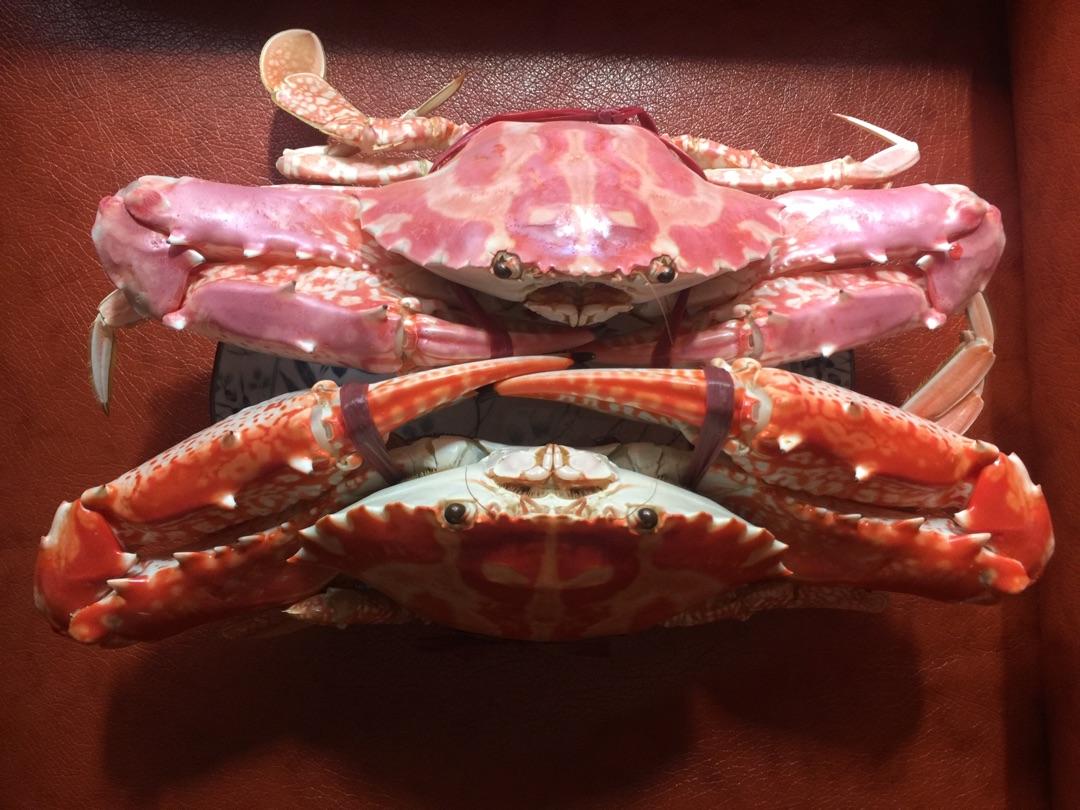 扎螃蟹步骤图解