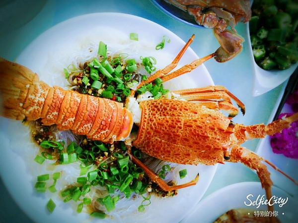 澳洲大龙虾