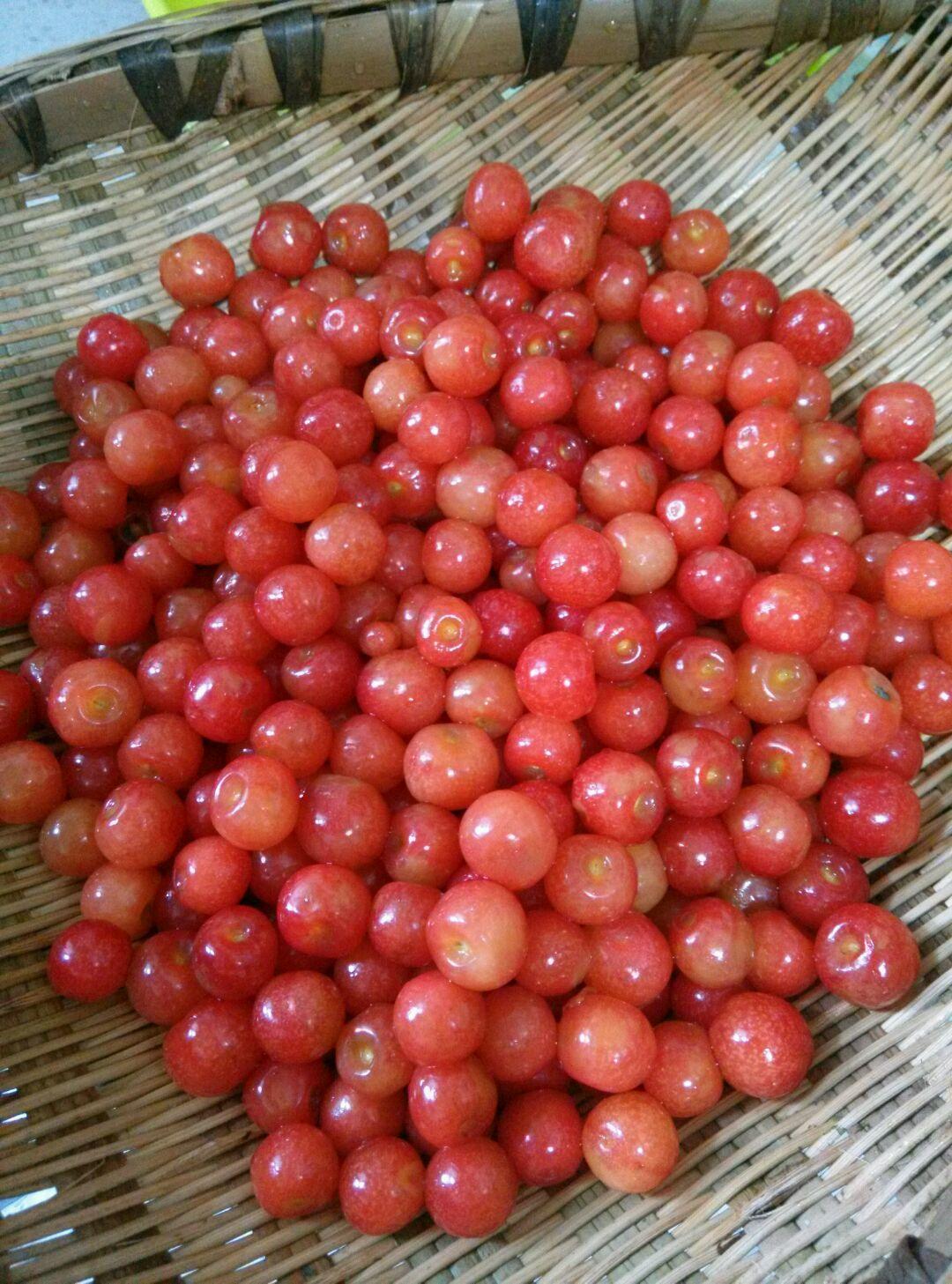 樱桃罐头的做法步骤