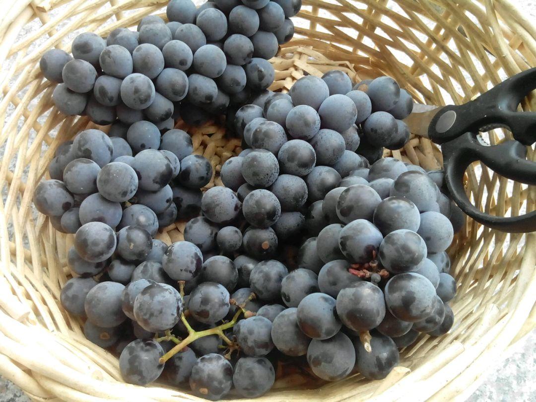 自制葡萄酒的做法步骤 5.