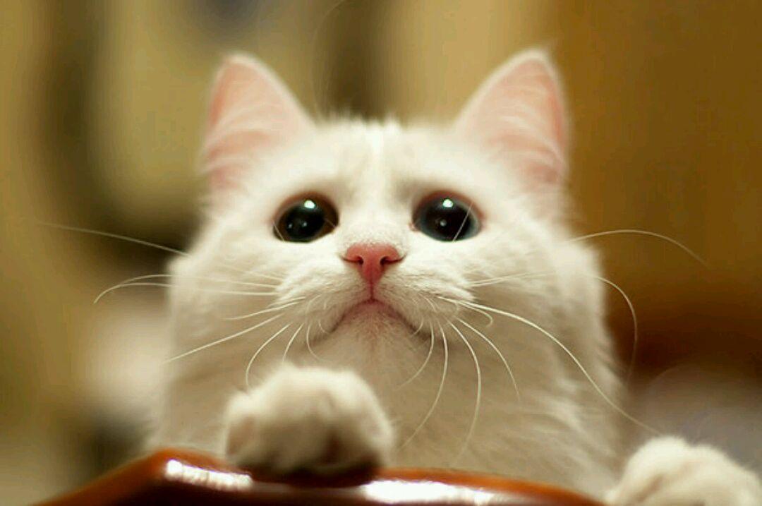 壁纸 动物 猫 猫咪 小猫 桌面 1080_717