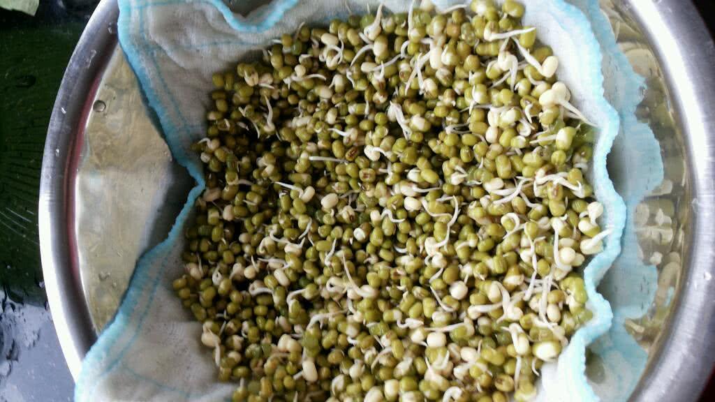 主料 绿豆少许 水不一定 自己发绿豆芽的做法步骤