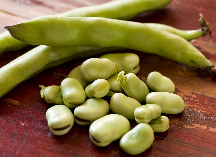 蚕豆幼芽的结构示意图