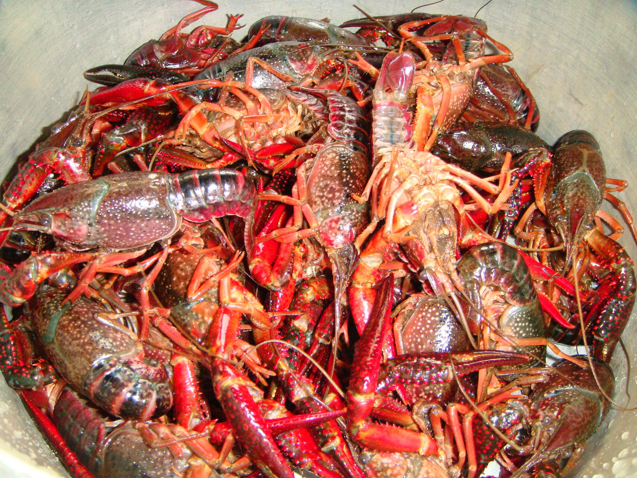 清蒸小龙虾的做法步骤