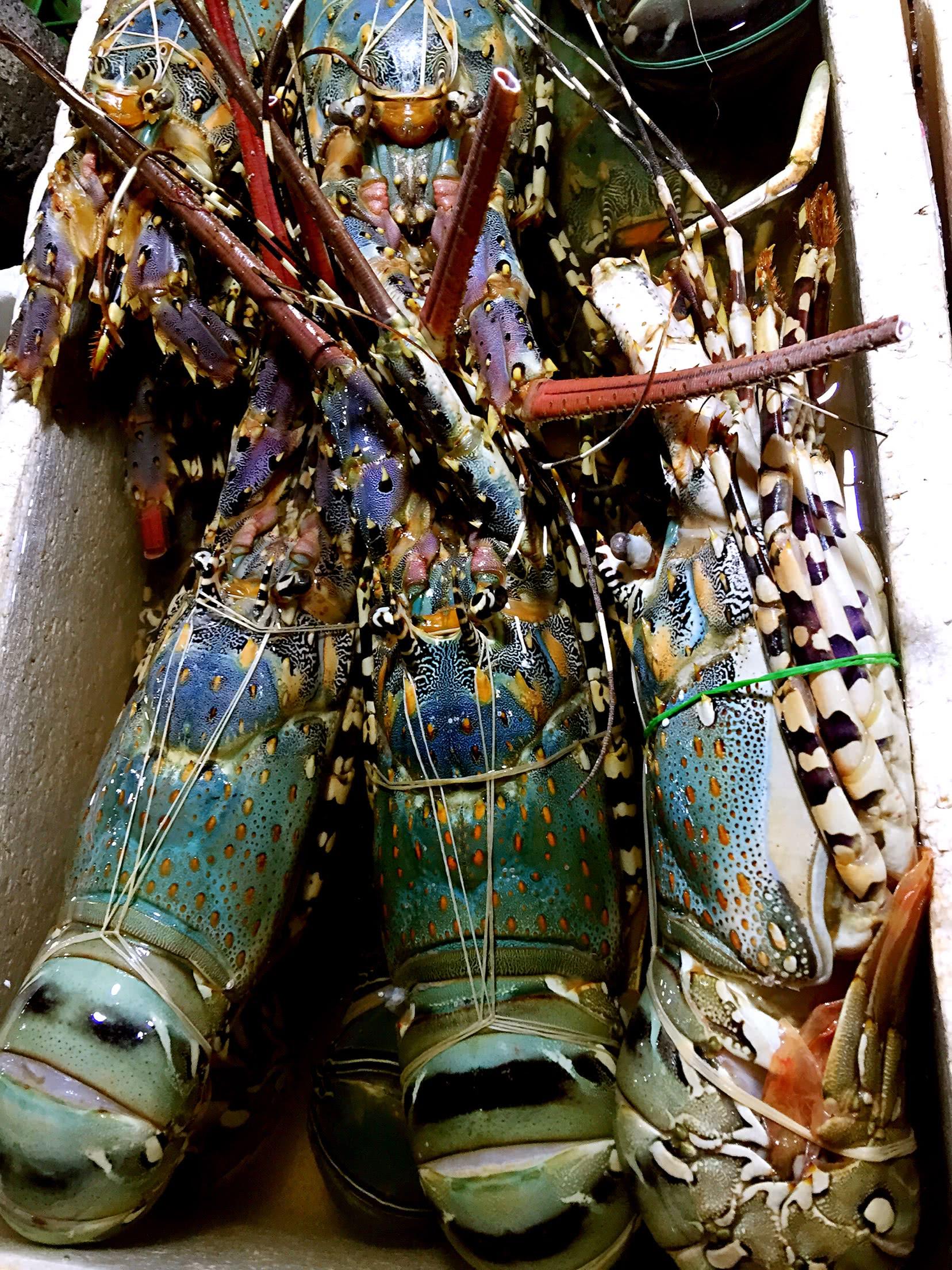 巴厘岛烤大龙虾