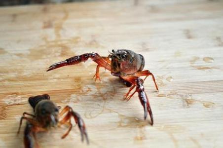 小龙虾的做法 !-- 图解1 -->