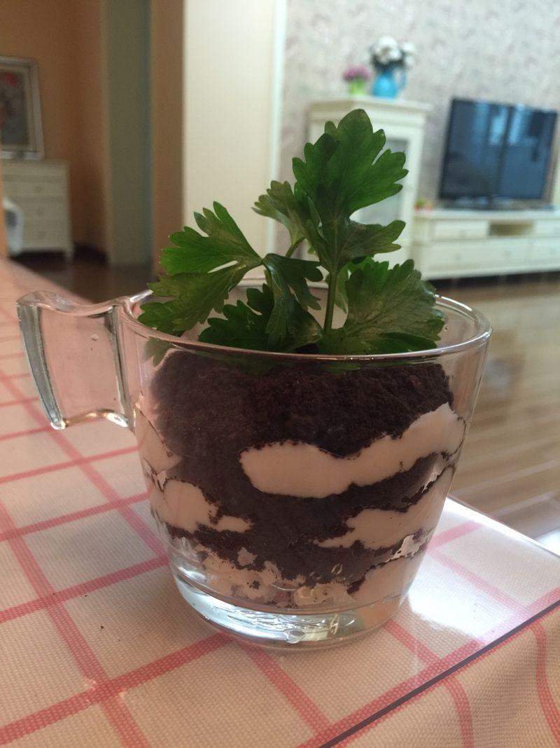 微信头像盆栽植物可爱