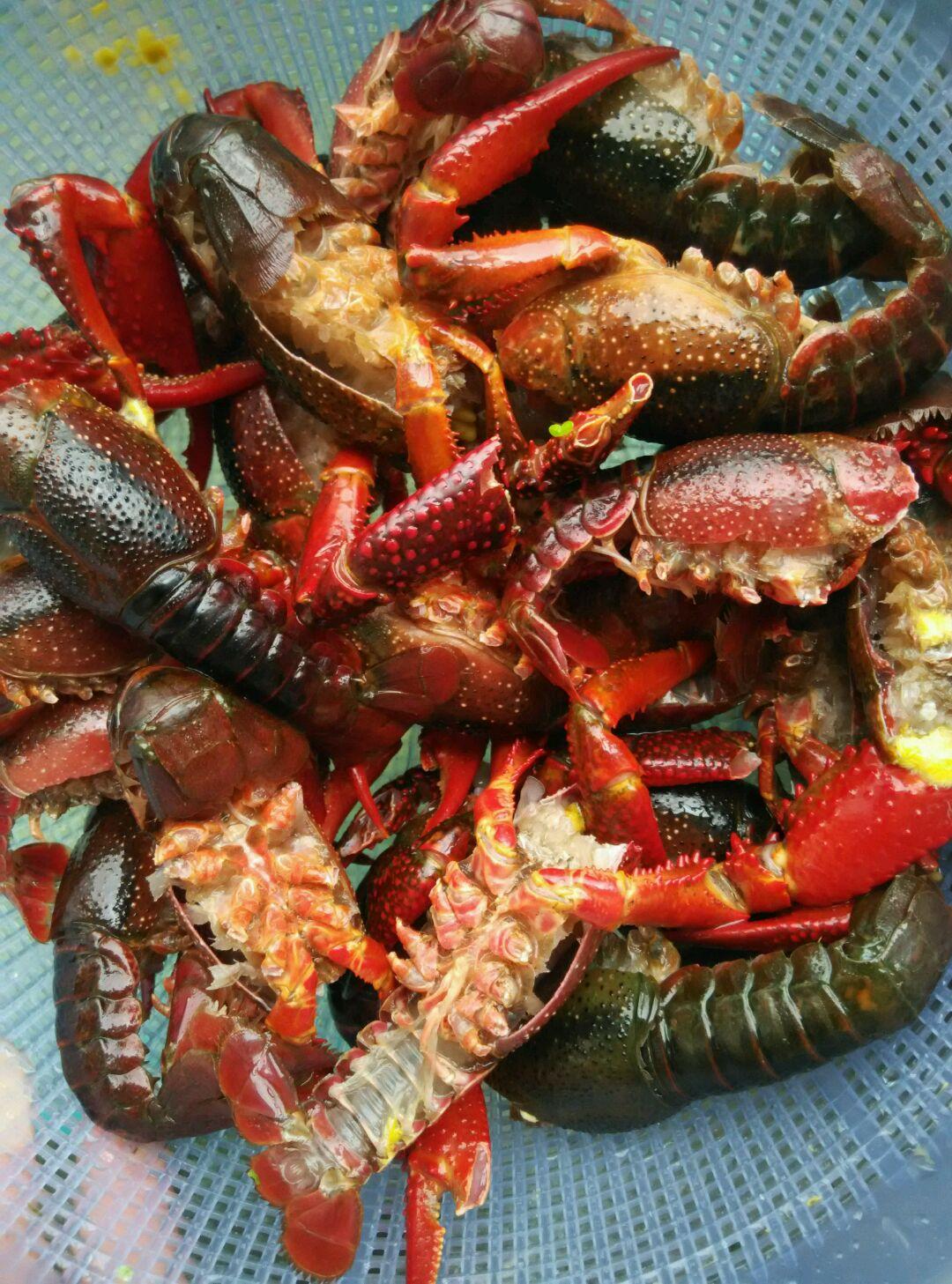 简单烧龙虾的做法图解1