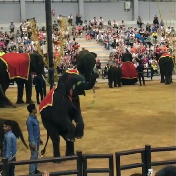 卖萌的小象的做法