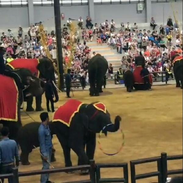 小象摇呼啦圈的做法